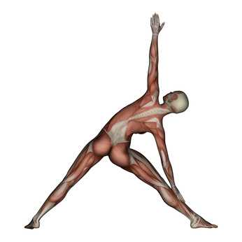 trikonasana key benefits and muscle groups